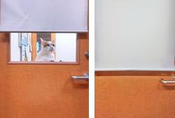 猫に優しい診療